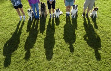 Group dog training Milwaukee